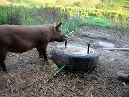 How To Build A Pig Barn 239 Best Cattle Ranching Images On Pinterest Goat Toys Goat