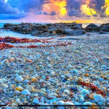 where to buy seashells seashells at coral cove park jupiter island