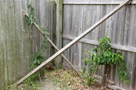 pics of my trees bushes and grape trellis dodge ram srt 10