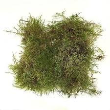 buy fresh moss wholsale flowers u0026 florist supplies uk