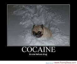 Cat Cocaine Meme - dog on cocaine dogs and cats pinterest funny pictures and memes
