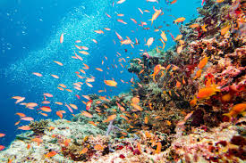 thanksgiving reefs the great barrier reef is in serious trouble these fish can help vox