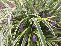 Botanical Garden Definition by Garden Bloggers U0027 Bloom Day September 2017