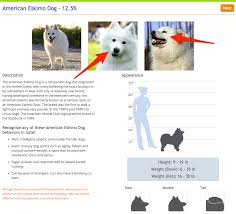 american eskimo dog what do they eat i got my dog u0027s dna tested and what i learned shocked me business