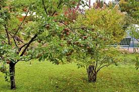 Planting Fruit Trees In Backyard 24 Delicious Backyard Fruit Tree Ideas
