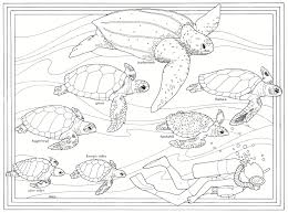 95 ideas green sea turtle coloring emergingartspdx