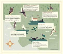 Duck Migration Map Birds Of Los Angeles Alexander Vidal Illustration