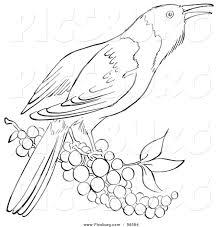 royalty free stock designs of birds