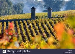 learn about st estephe bordeaux gironde estephe bordeaux and medoc wineyards