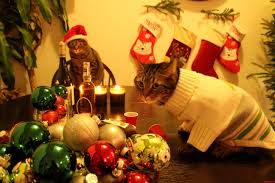 christmas eve cat party cute cats hq pictures of cute cats and