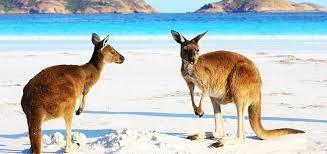 imagenes animales australia 10 animales de australia que te encantará conocer