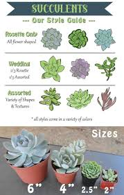 65 best succulent care and referrence images on pinterest