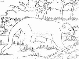 free florida panthers coloring pages 22581 bestofcoloring