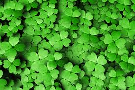 celebrate st patrick u0027s day without packing on the pounds avance