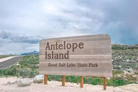Utah wildlife tours images Antelope island wildlife safari tours of utah jpg