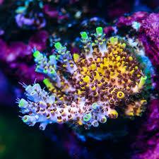 reef a palooza orlando