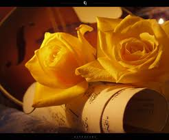 golden roses flowers images golden roses hd wallpaper and background photos