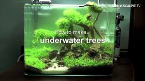 Plants For Aquascaping Aquascaping How To Make Trees In Planted Aquarium Youtube