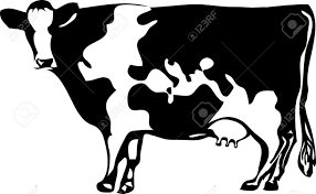 Map Of The World Black And White by Vector Drawing Of The Cow With Stylized Map Of The World Royalty