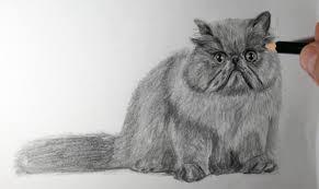 imagenes a lapiz de gatos dibujo de gato persa a lápiz youtube