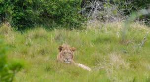 african safari animals south african safari national parks that you can afford