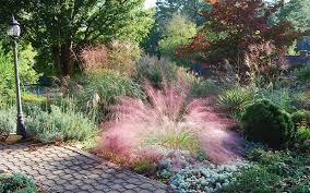 pink muhly grass 3 gallon ornamental grass perennial