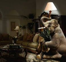elephant in the living room elephant in the living room morning meditations