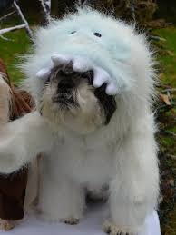 abominable snowman costume abominable snowman looks like bumble christmas dog costume