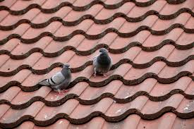 How To Get Rid Of Pigeons On My Roof by Feral Pigeon Deterrents The Rspb