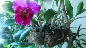 my orchid garden u0026 propagation youtube