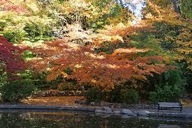 fall colors lithia park ashland oregon u2014 northern