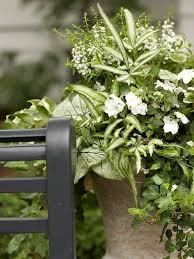 Plant Combination Ideas For Container Gardens - 43 best container garden ideas images on pinterest gardening