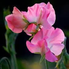 imagenes lindas naturaleza pin de gil carvalho en flores pinterest cosas lindas naturaleza