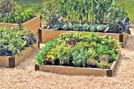 25 best container vegetable gardening ideas on pinterest