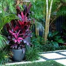 Tropical Potted Plants Outdoor - best 25 tropical garden design ideas on pinterest small
