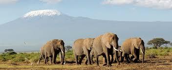 Connecticut wildlife tours images Tanzania safari tours tanzania kilimanjaro vacations jpg