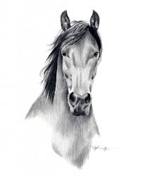 pencil sketch of horse freehand horse head pencil drawing stock