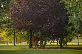 native ohio plants colour columbus 1 000 native tree collection chadwick arboretum