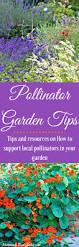 five tips for pollinator garden success homemade food junkie