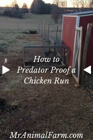 Best Backyard Chicken by 506 Best The Poultry Guide Images On Pinterest Raising Chickens