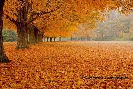 10 england fall foliage spots regions