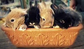 bunny basket bunny basket