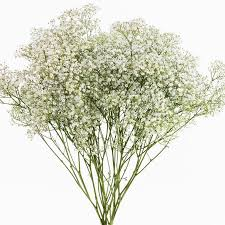 babys breath fresh flowers baby s breath 5 bunches walmart