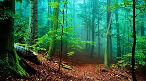 Deep Forest Green Green Forrest Deep Forest 1920x1080 1102964 Green Forrest