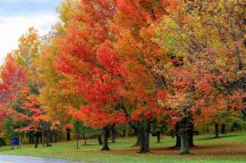 all about fall color fast growing trees