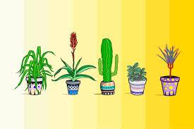 plants to detoxify your home reader u0027s digest reader u0027s digest