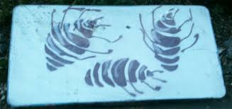 How Often Do Bed Bugs Reproduce Step By Step Help For Eliminating Bed Bugs Bed Bugs Northwest