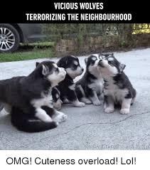 Cuteness Overload Meme - 25 best memes about omg cute omg cute memes