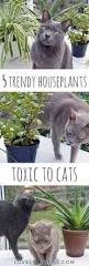 5 trendy houseplants that are toxic to cats lovely greens