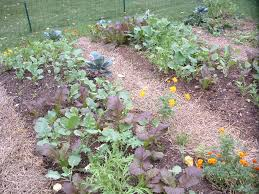 small space gardens fall raised bed vegetable garden photo veggie